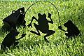 El Paso - Ma's backyard frogs
