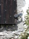 Monterey_gen_shermans_shutters