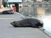 Monterey_adock_dudes_had_a_bad_day