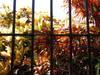 Mazatlan_tropical_colors_4