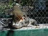 Matanchen_jungle_ride_felipe