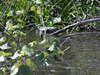 Matanchen_jungle_ride_salt_water_cr