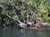 Matanchen_jungle_ride_turtles