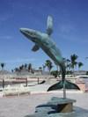 La_paz_32008_humpback_2
